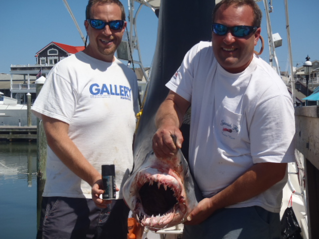 3rd place South Jersey Shark Tournamnet 285lb Mako